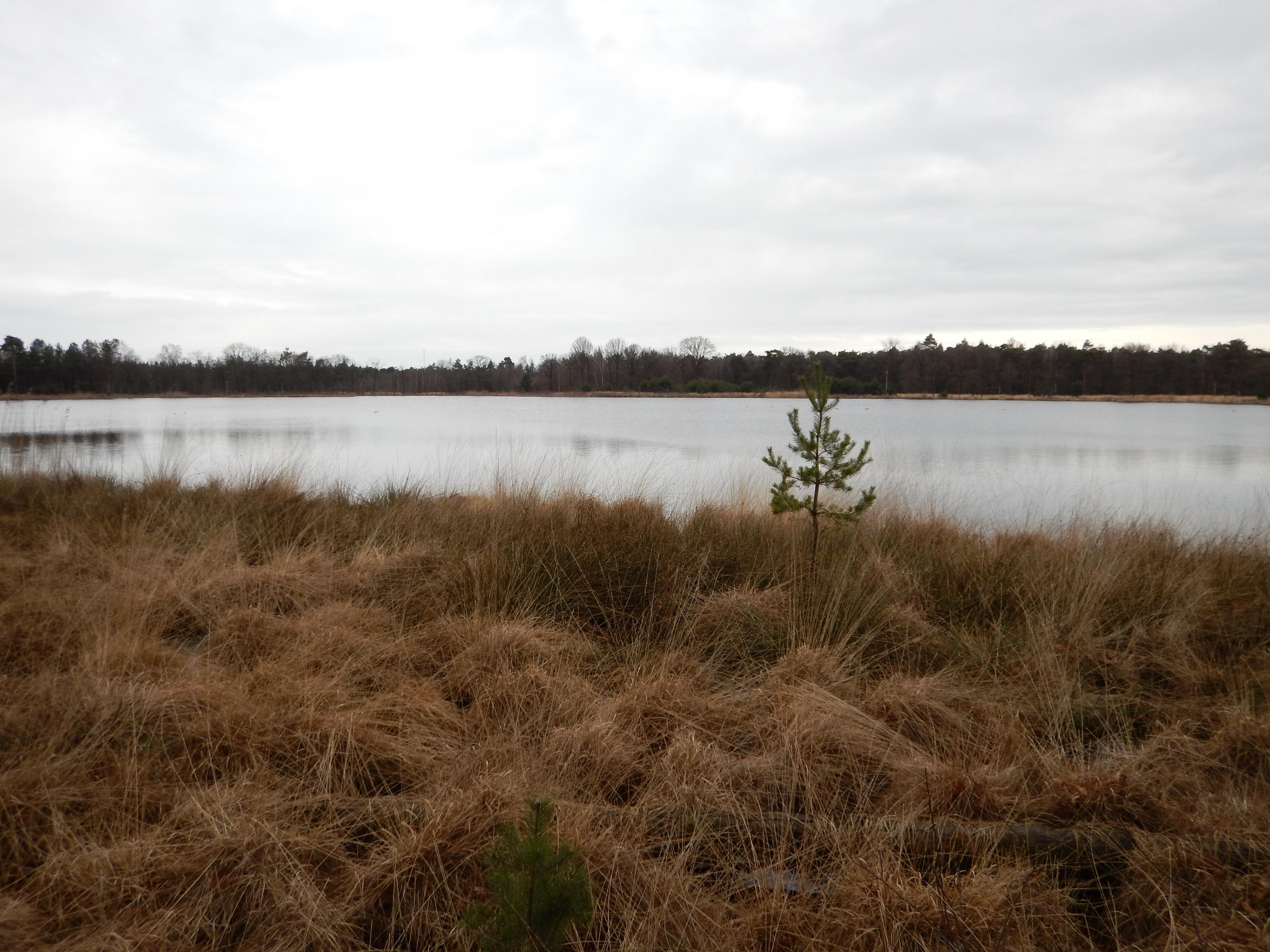 Willemeen bivak 2017
